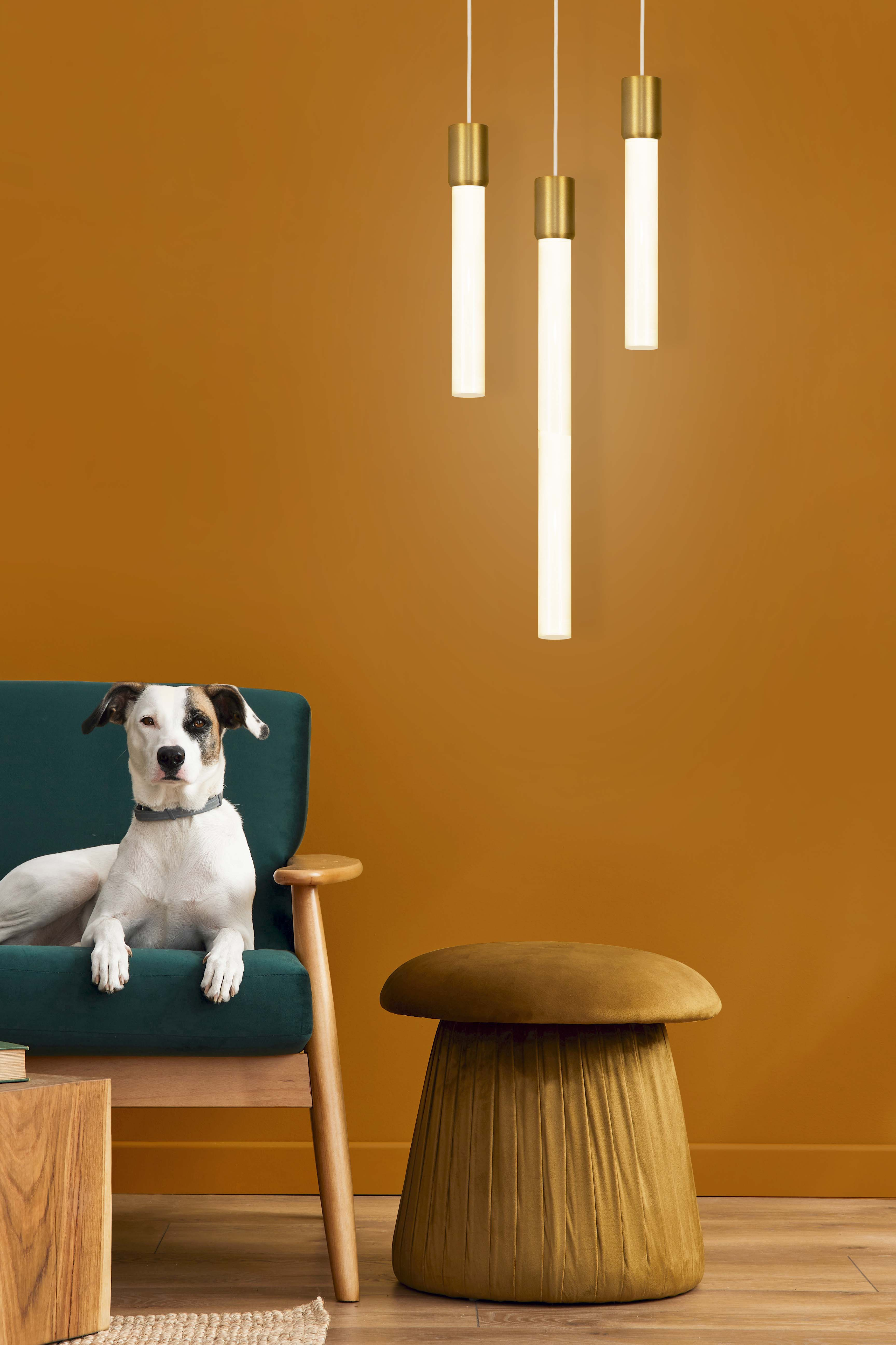 Theo light rod pendant with gold brass finish and blue couch with dog