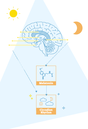 Circadian lighting science explained for interior designers.