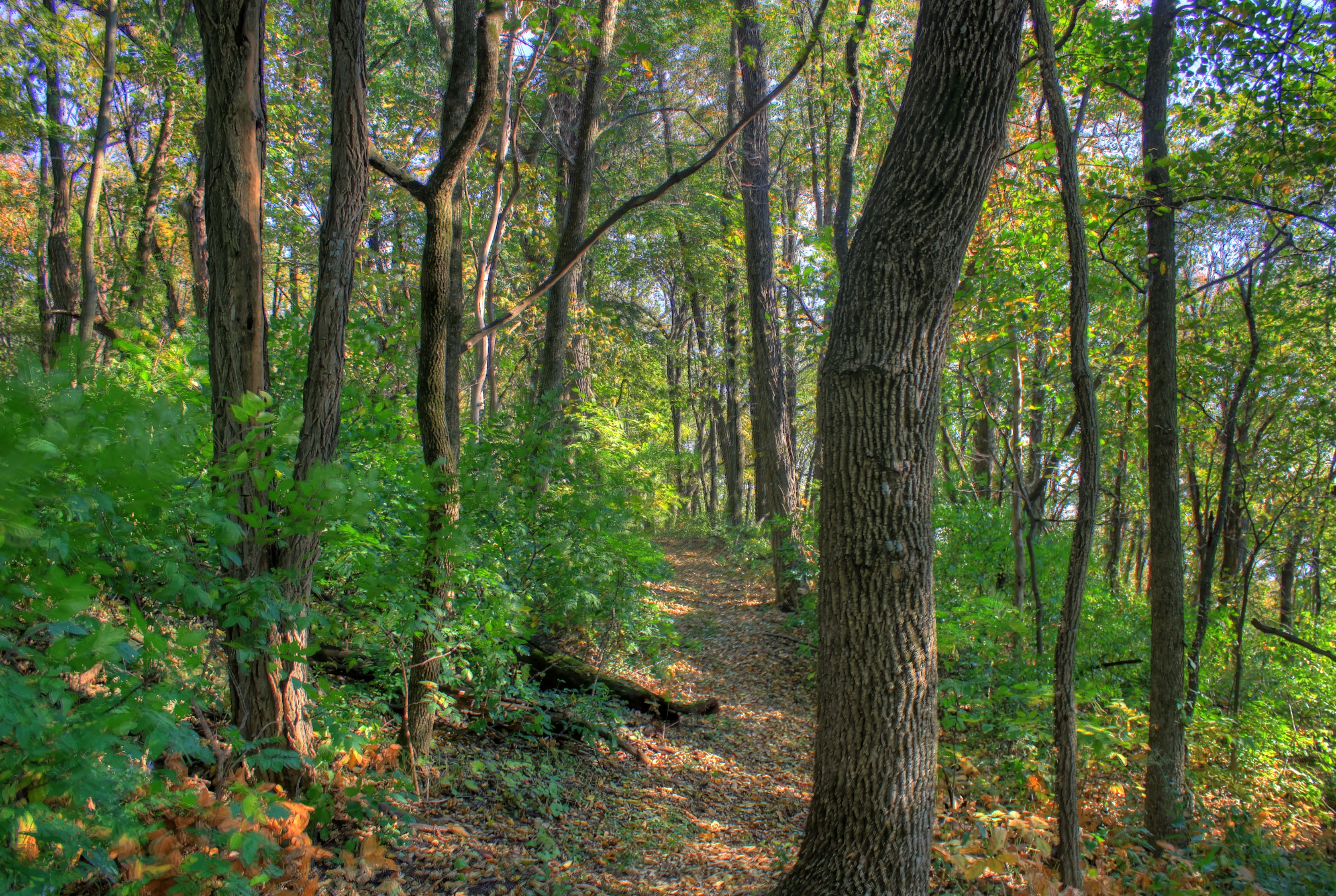 Wisconsin northwoods, where specifiers relax and innovate