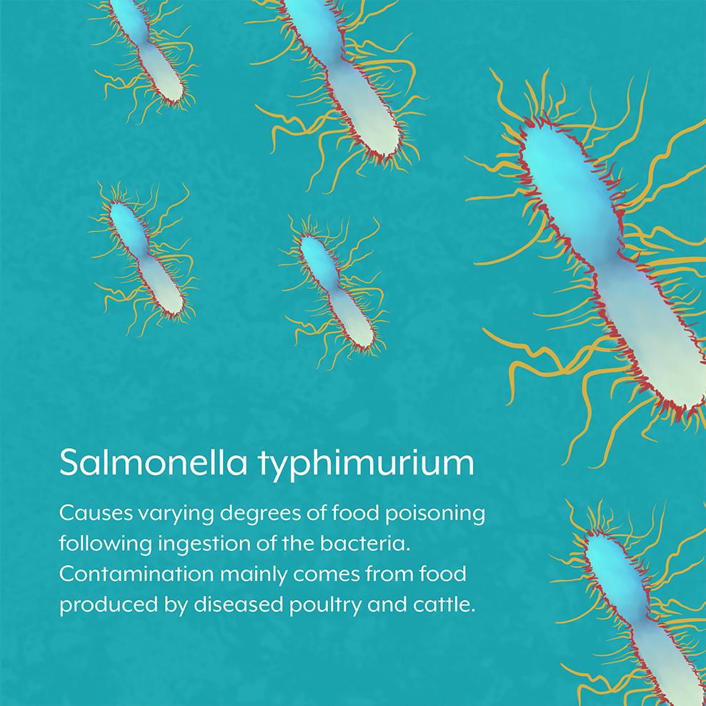 Salmonella bacteria facts
